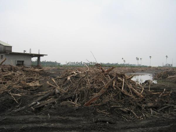 佳冬塭豐潰堤處滿滿的漂流木.JPG