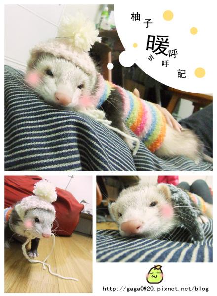 柚子帽帽.jpg