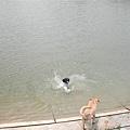 她就已經自己先跳下水去游泳去了~!