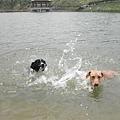 你是豬看不過去也自己跟進去游泳,展現游姿!