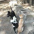 黑狗狗一直找牛牛交朋友