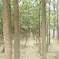 森林大道內部