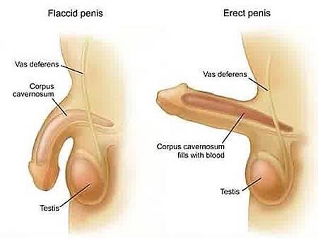 cara memperbesar penis secara alami terbukti jitu.jpg