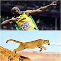 Puma Bolt