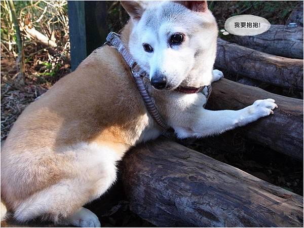 20111225-005DaKeng.JPG