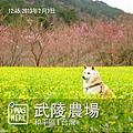 Photo 13-2-3 16 25 20