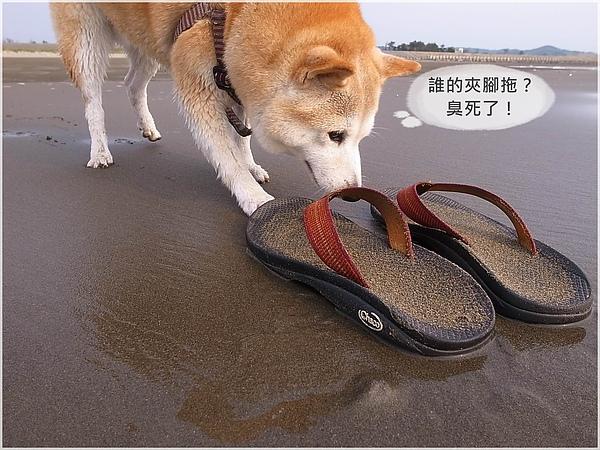R1280346後龍水尾沙灘.JPG