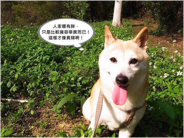R1275836-2冠軍狗.JPG
