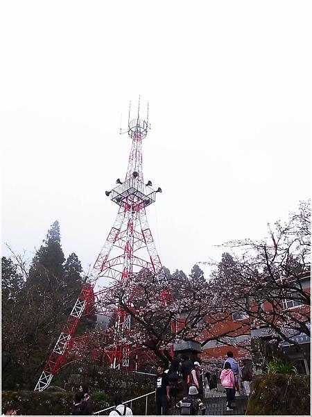 R1276670-33阿里山櫻花.JPG