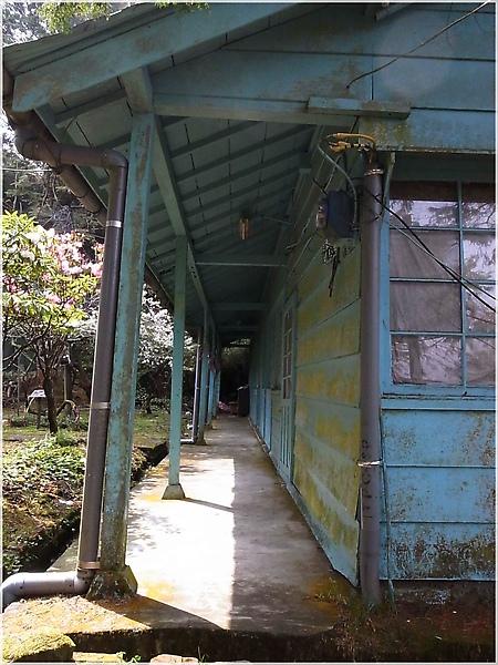 阿里山櫻花R1276572-14完結篇.JPG