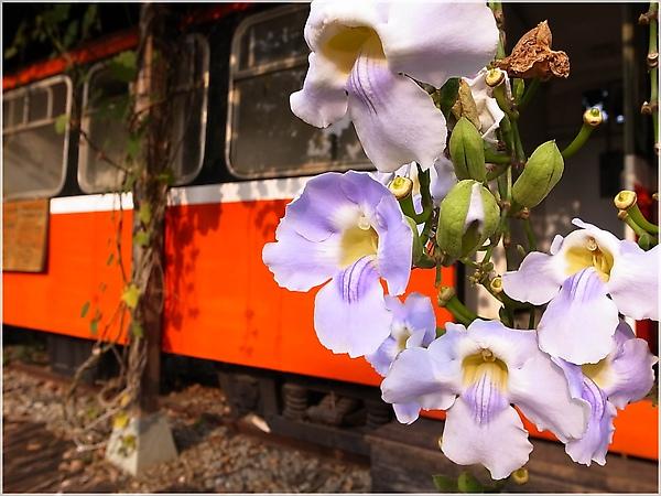 R1273998-14阿里山火車.JPG