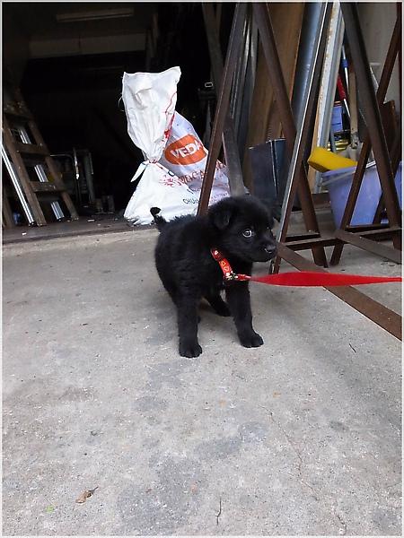 puppy-3湖口老街.JPG