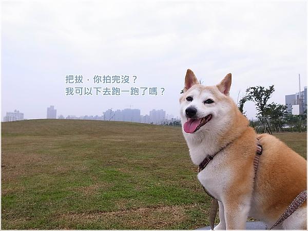 台中R1277262-20水崛頭公園.JPG