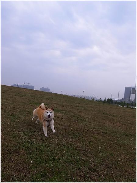 台中R1277276-23水崛頭公園.JPG