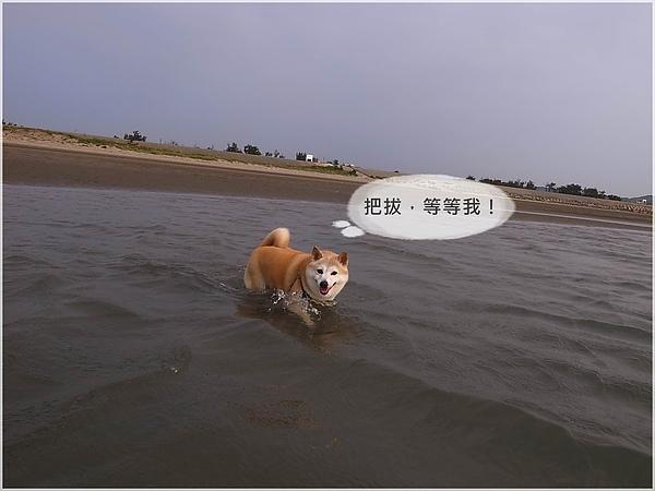 R1280320後龍水尾沙灘.JPG