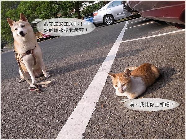 12柑妹.JPG