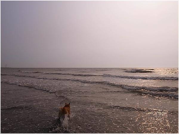 R1280361後龍水尾沙灘.JPG