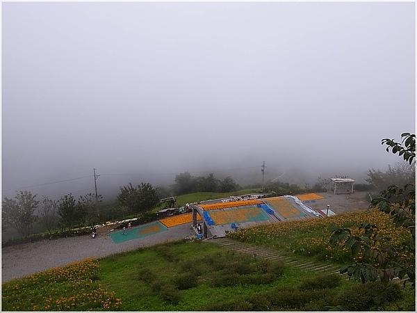 024台東金針山.JPG