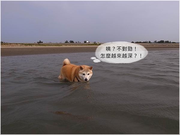 R1280321後龍水尾沙灘.JPG