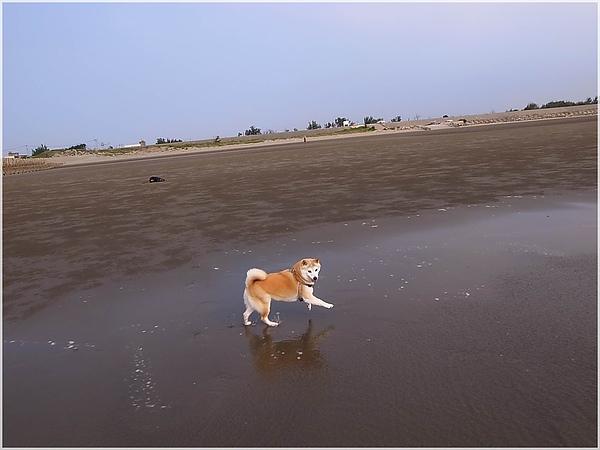 R1280189後龍水尾沙灘.JPG