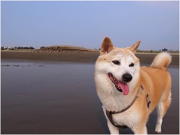 R1280229後龍水尾沙灘.JPG