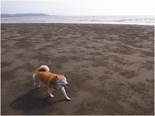 R1280185後龍水尾沙灘.JPG