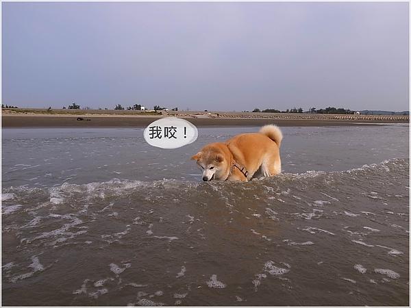 R1280238後龍水尾沙灘.JPG