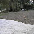 P1010152
