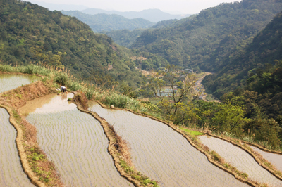 山區水梯田與河溪形成一個水域生態廊道,也與森林共構生態系的鑲嵌體。s.jpg