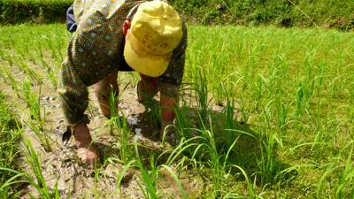 挲草是一種修行,彎著腰把老天爺賜予的野草變成肥份,也使水稻的根系在逆境中更紮實。s.jpg