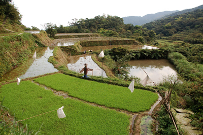 農戶保有自行選種育苗的習慣,維繫了適宜春季多霧山區的作物基因庫。s.jpg