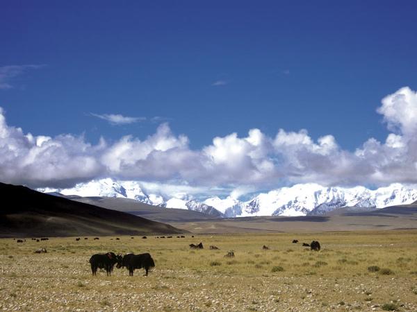08-西藏的移動小學.jpg