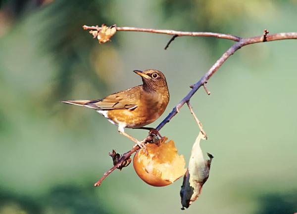 06-從鳥人到木頭人.jpg