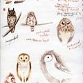 Muncaster Owls 9-10-08s.jpg