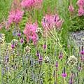 homepage_pinkfloral[1].jpg
