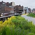 baan-chelsea-grasslandss.jpg