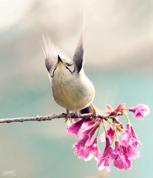 春天的指揮家s.jpg