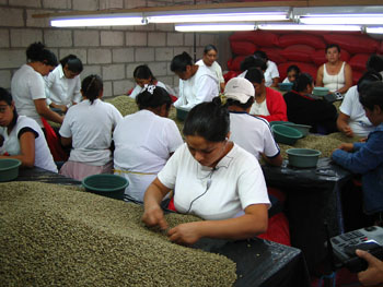 RAOS-人工篩選咖啡豆s.jpg
