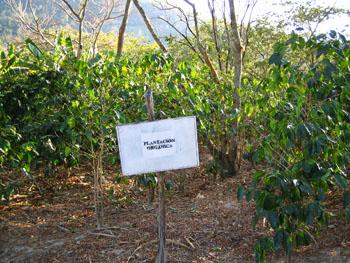 COMSA-有機咖啡農場s.jpg