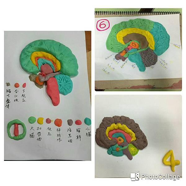 (6)11.07(三)整合上下腦3
