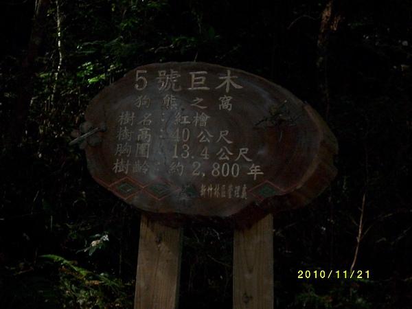原鄉部落-拉拉山巨木 (16).jpg