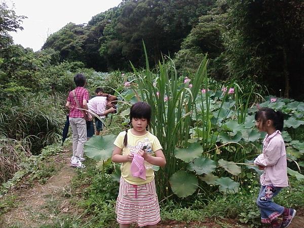 竹峰茶園10