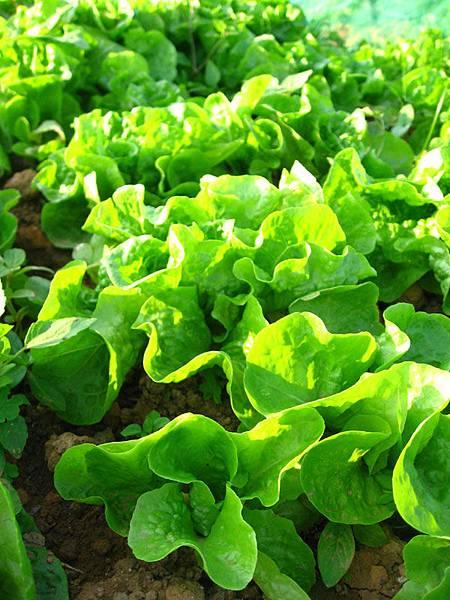 天然健康蔬菜.jpg