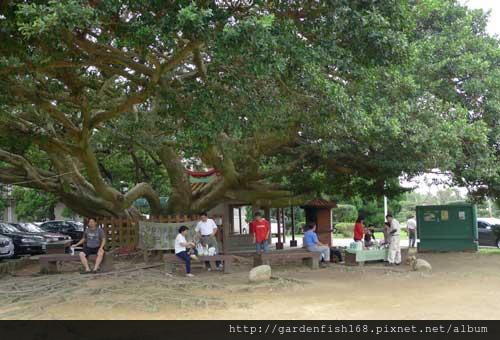 樹下乘涼.jpg
