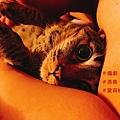 money cat.jpg