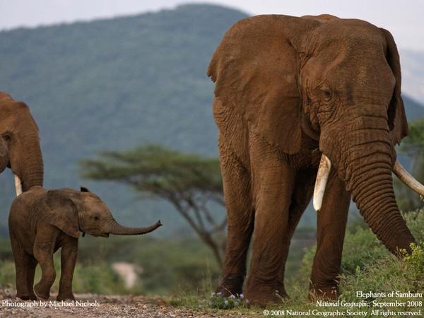 大象寶寶.jpg