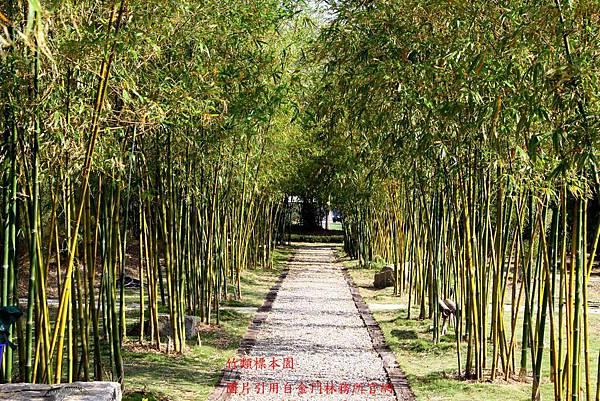 竹類標本園s.jpg