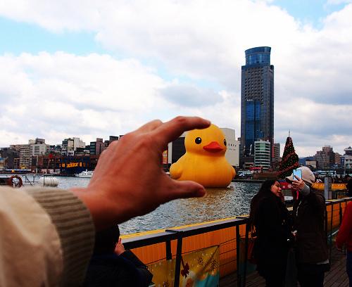duck_4.JPG