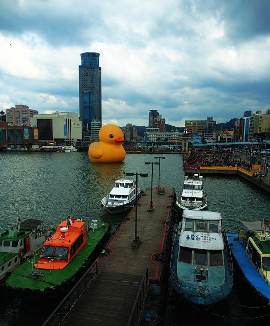 duck_5.JPG