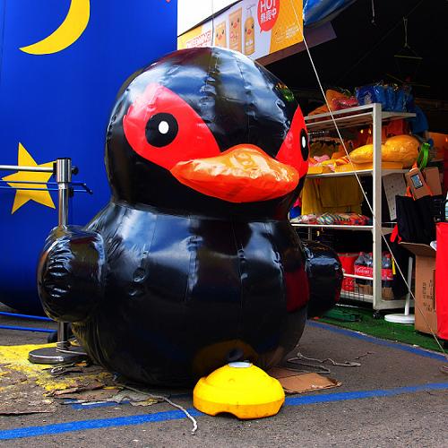 duck_7.JPG